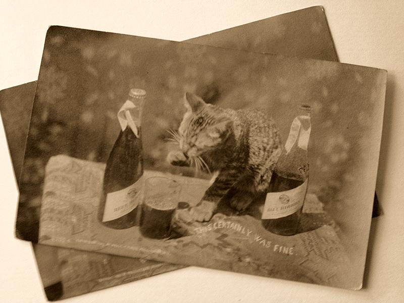 Cat-vertising for Pabst